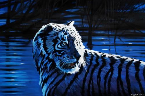 Тигр оглядывается через плечо