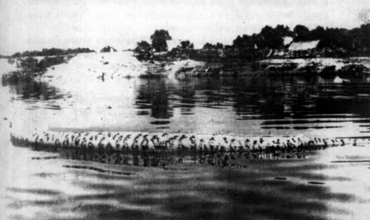 Туша убитой сукурию гиганте дрейфует по реке Абуна