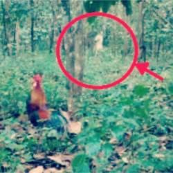 Автор кадра утверждает, что запечатлел буньян в лесу