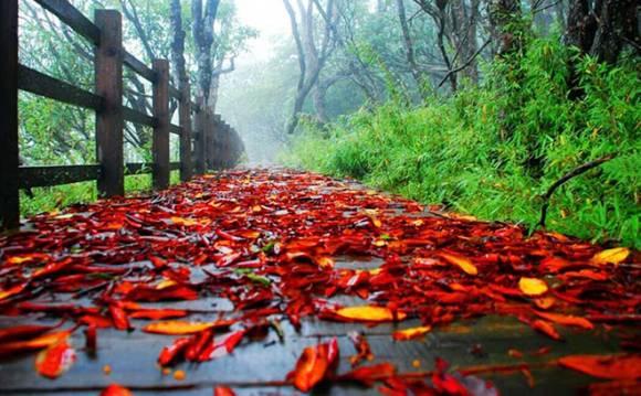 Красные листья усыпали землю